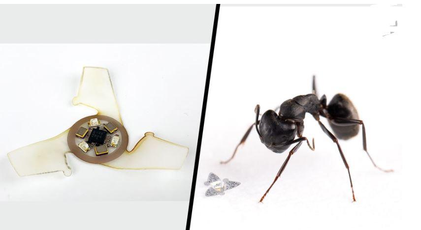 В США разработали летающее устройство без мотора меньше муравья для контроля загрязнений с воздуха