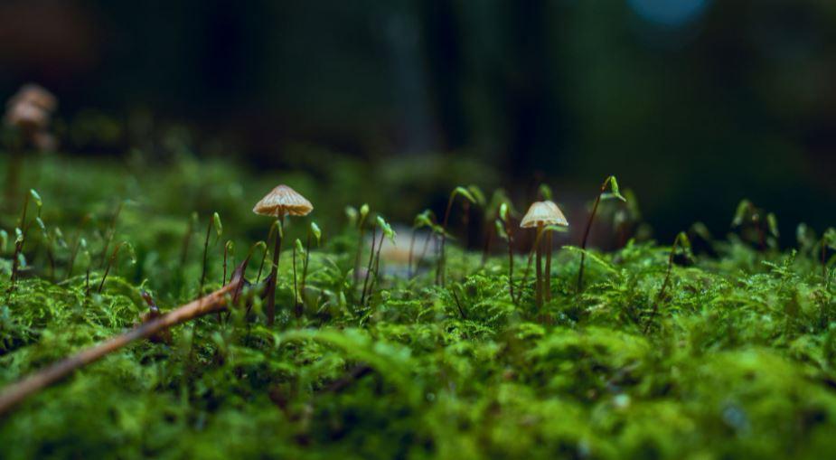 Миколог разрешил есть червивые грибы