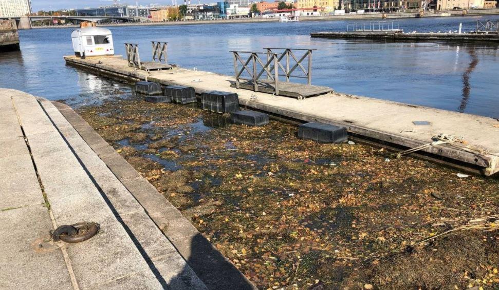 Небольшое болото с листвой и мусором образовалось в районе Аптекарской набережной