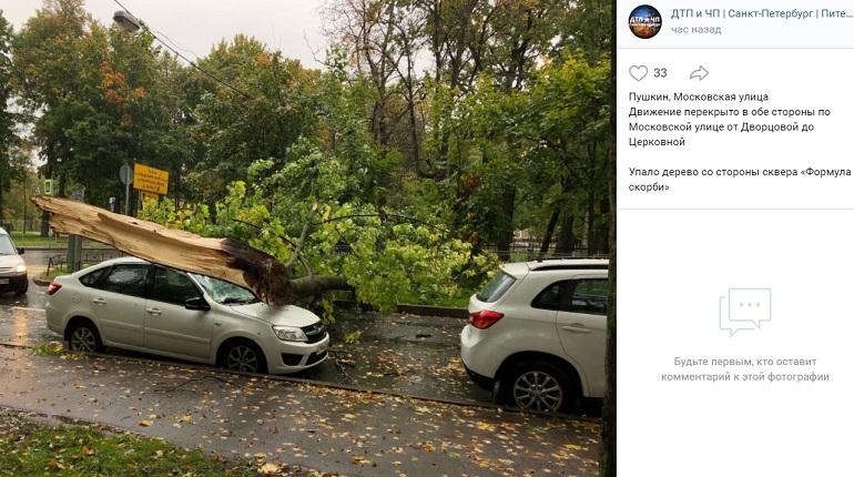 Сильный ветер в Петербурге и Ленобласти повалил деревья и испортил флаг России