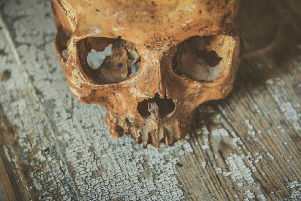 Палеонтологи нашли следы кариеса у приматов, живших 54 млн лет назад