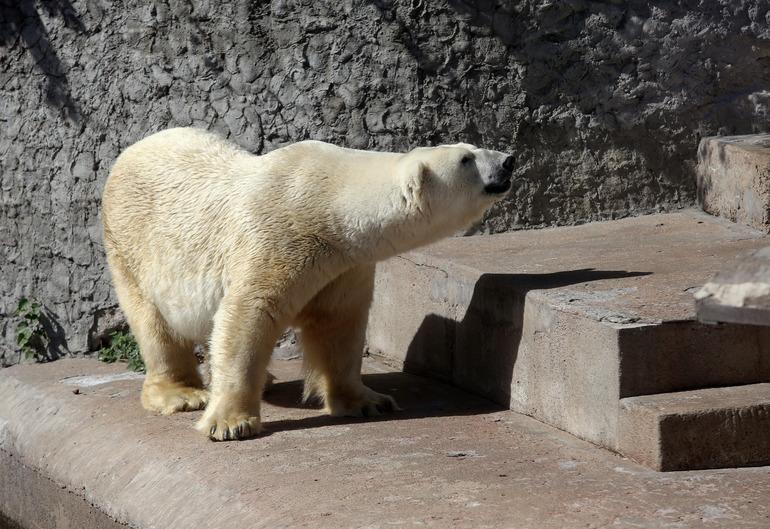 Петербуржцы собрали для питомцев Ленинградского зоопарка почти 800 кг осенних лакомств
