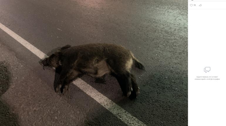 ДТП на Старо-Приозерском шоссе не обошлось без жертв