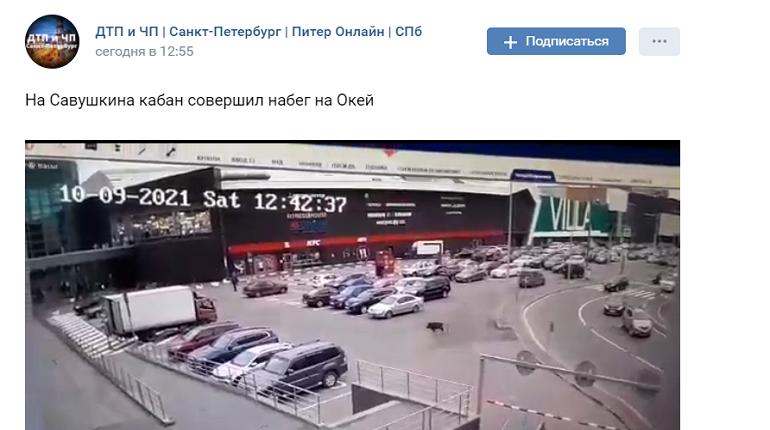 Кабан вдребезги разбил дверь гипермаркета «Окей» на Савушкина