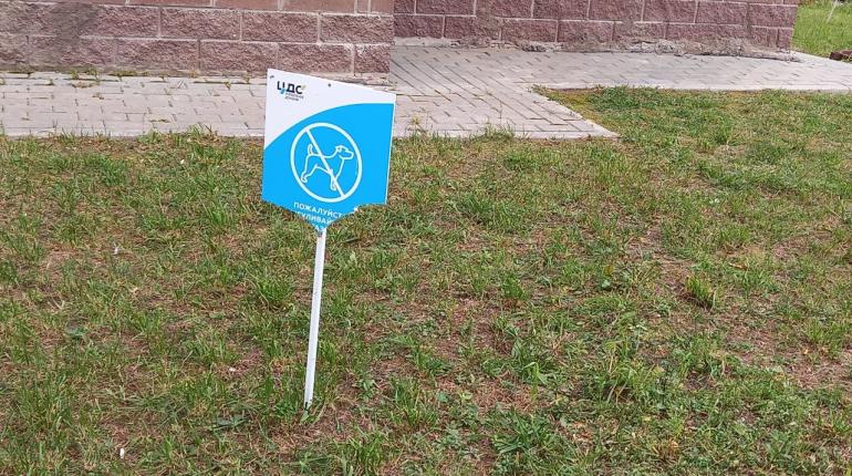 В Мурино собаки погрызли таблички, запрещающие выгул собак
