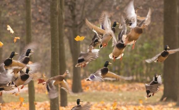 На выходных в Петербурге будут считать птиц