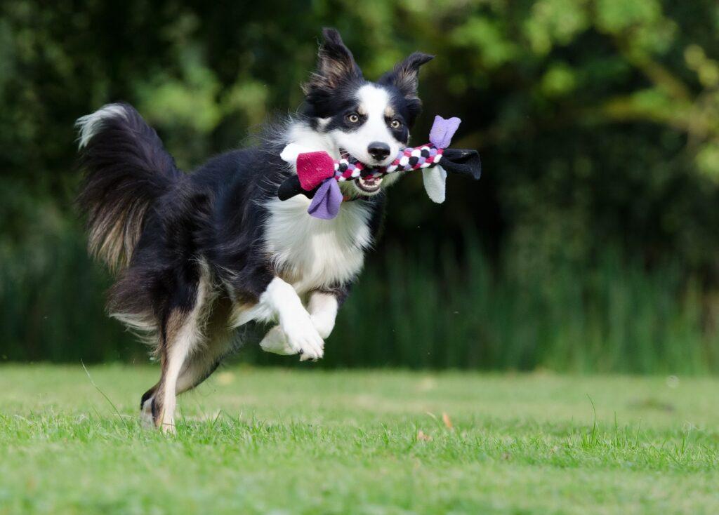 Ученые нашли у собак способность запоминать 12 слов в неделю