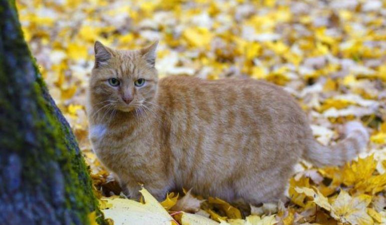 Неизвестная забрала кота-смотрителя Осю из петербургского музея Анны Ахматовой